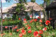 Поместье на хуторе Савки